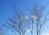 冬でも日焼け止めは必要。冬の紫外線対策が美肌を作る!